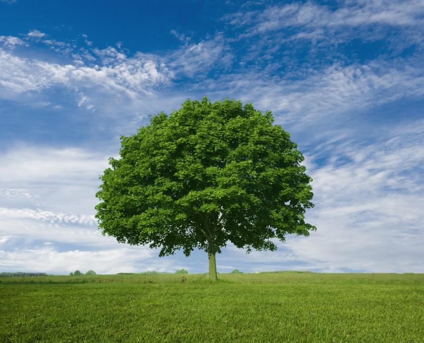 27323664-beautiful-tree